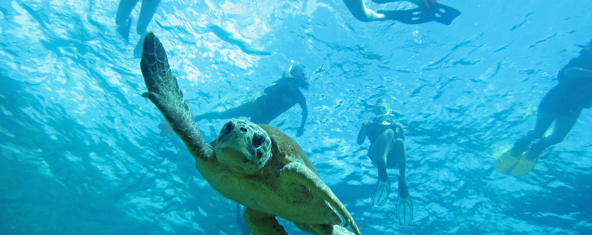 Turkey- Turtles & Marine Biology